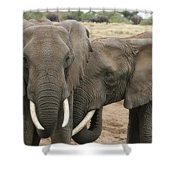 Shower Curtain featuring the photograph Display Of Affection by Gary Hall