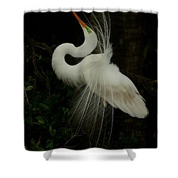 Displaying In The Shadows Shower Curtain