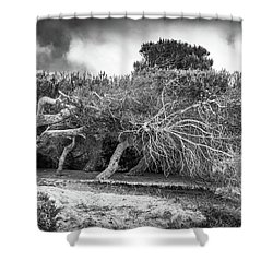 Distorted Trees Shower Curtain