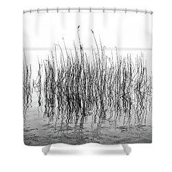 Distortion  Shower Curtain by Karen Stahlros