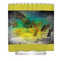 Dive Buddies Shower Curtain