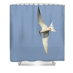 Shower Curtain featuring the photograph Dive by Tony Beck