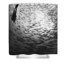 Diver And A Large School Of Bigeye Shower Curtain by Steve Jones