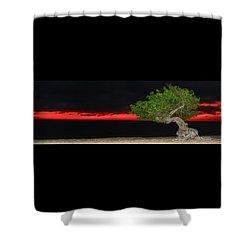 Divi Divi Night Shower Curtain