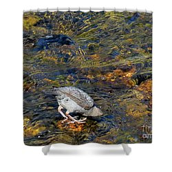 Shower Curtain featuring the photograph Diving For Food by Ausra Huntington nee Paulauskaite