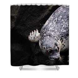 Shower Curtain featuring the photograph Diving In Head First by Nick Gustafson