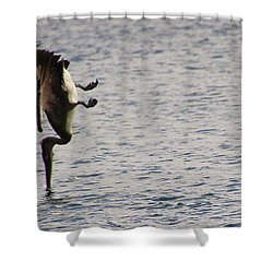 Diving Pelican Shower Curtain by Laurel Talabere