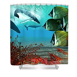 Diving Whales Shower Curtain by Corey Ford