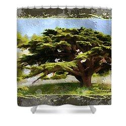 Do-00318 Cedar Barouk - Framed Shower Curtain