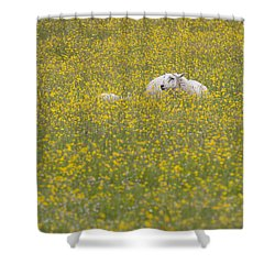 Do Ewe Like Buttercups? Shower Curtain