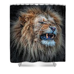 Do Not Disturb Shower Curtain