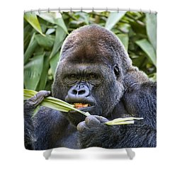 Do You Mind Shower Curtain