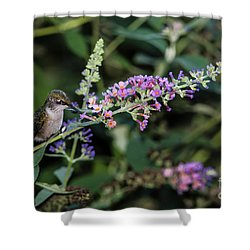 Do You Mind Shower Curtain by Judy Wolinsky
