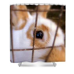 Do You See What Eye See Shower Curtain by Ed Smith