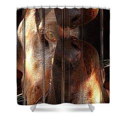 Doberman Pincher Shower Curtain by Liane Wright