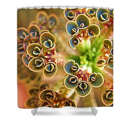 Up And Coming Body Snatchers Shower Curtain by John King
