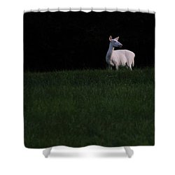 Doe, A Deer Shower Curtain