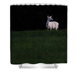 Doe, A Deer Shower Curtain