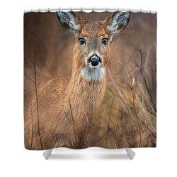 Shower Curtain featuring the photograph Doe A Deer by Robin-Lee Vieira