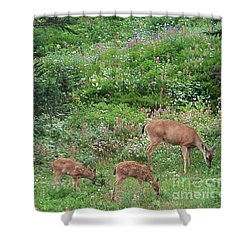 Shower Curtain featuring the photograph Doe And Twin Fawns by Charles Robinson