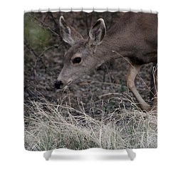 Doe Carefully Grazing In Tombstone Shower Curtain by Colleen Cornelius