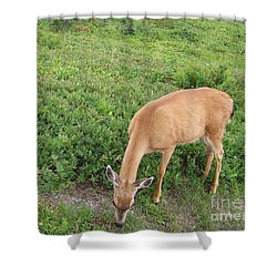 Shower Curtain featuring the photograph Doe by Charles Robinson