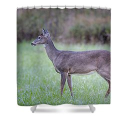 Shower Curtain featuring the photograph Doe In Cades Cove by Tyson Smith