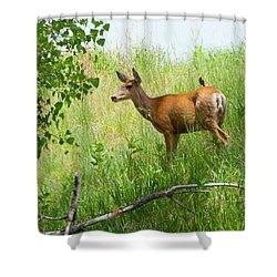 Doe Meets Bird 1 Shower Curtain