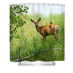 Doe Meets Bird 2 Shower Curtain