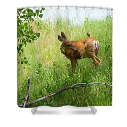 Doe Meets Bird 3 Shower Curtain