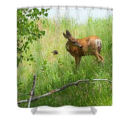 Doe Meets Bird 4 Shower Curtain