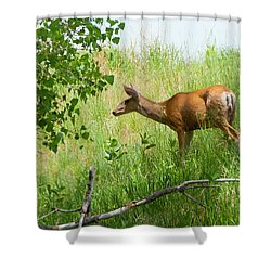Doe Meets Bird 5 Shower Curtain