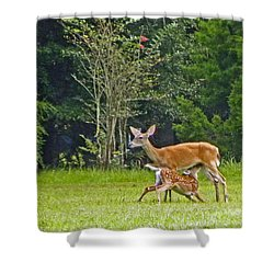 Doe Nursing Fawn Shower Curtain