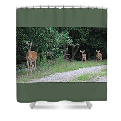 Doe With Twins Shower Curtain