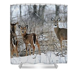 Does And Fawns Shower Curtain