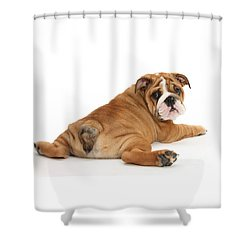 Does My Bum Look Big In This? Shower Curtain