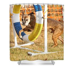 Shower Curtain featuring the photograph Dog Agility Tire by Debbie Stahre