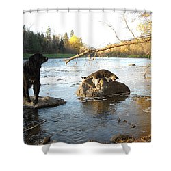 Dog And Cat Exploring Rocks Shower Curtain