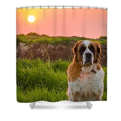 Dog And Sunset Shower Curtain