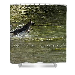 Dog Chasing His Stick Shower Curtain