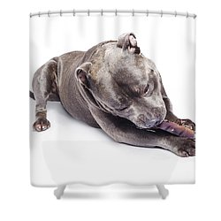 Shower Curtain featuring the photograph Dog Eating Chew Toy by Jorgo Photography - Wall Art Gallery