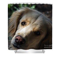 Dog Eyes Shower Curtain