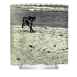 Dog Frolicking On A Beach Shower Curtain by Ken Morris