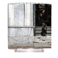 Dog From The Block Shower Curtain