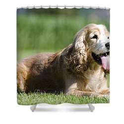 Dog Lying Down On The Green Grass Shower Curtain