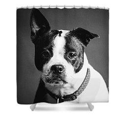 Dog - Monochrome 1 Shower Curtain