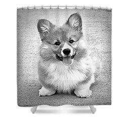 Puppy - Monochrome 6 Shower Curtain