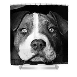 Dog - Monochrome 2 Shower Curtain