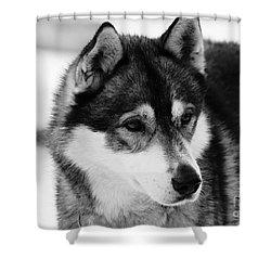 Dog - Monochrome 3 Shower Curtain