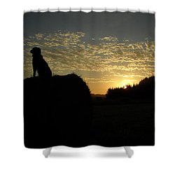 Dog On Hay Greeting Sunrise Shower Curtain